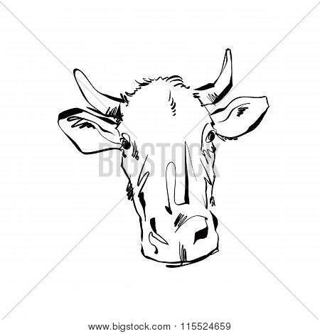 Black And White Hand Drawn Cow, Illustration Of A Cow.