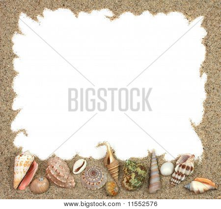 Conch Shells Frame
