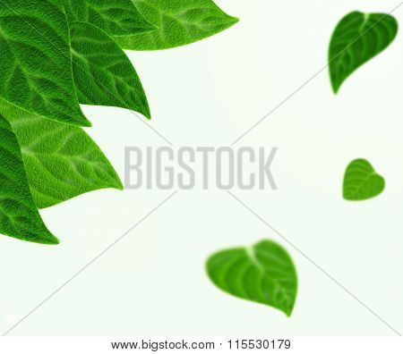 Beautiful fresh green leaves realistic background.