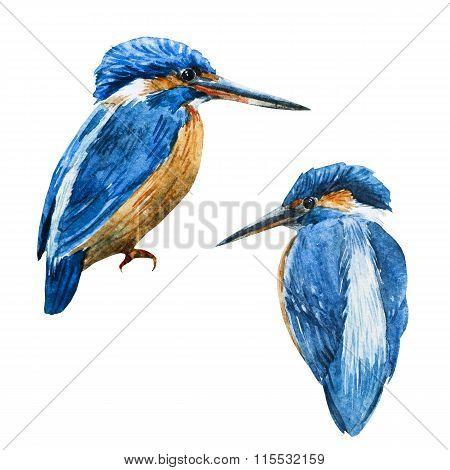 Watercolor raster blue kingfisher bird