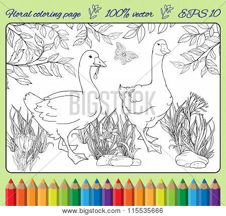 coloring page with gooses