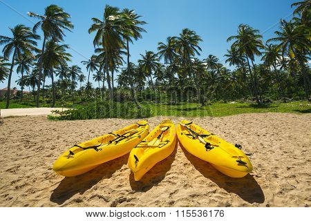 Canoe Kayak Boats On Sunny Tropical Beach With Palm Trees