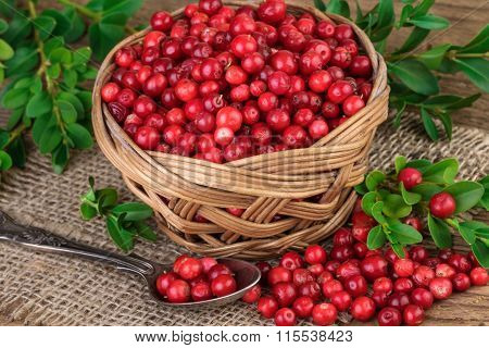 Basket of red cranberries