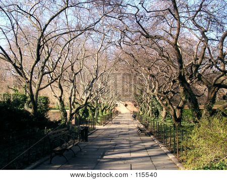 Solitary Path In Central Park