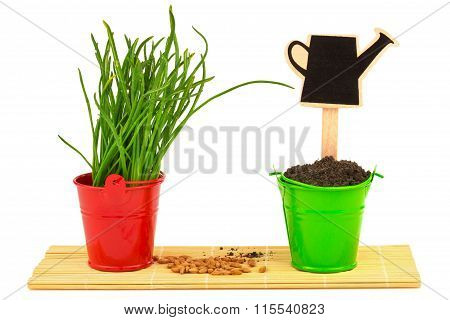 Spring Concept With Grass, Soil, Seeds In The Buckets