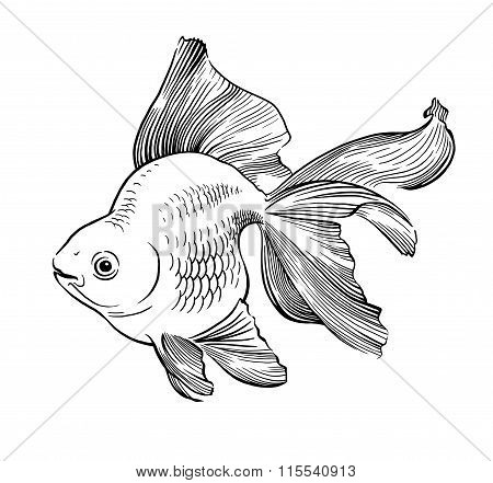 Goldfish illustration artwork  line underwater engraving black and white