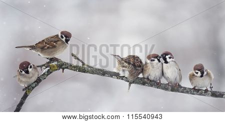 Sparrow on branch in winter