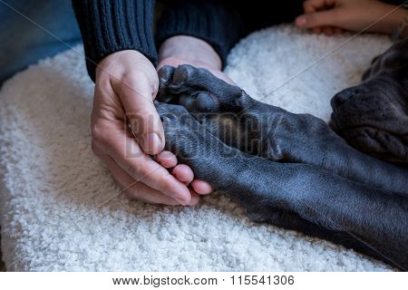 Pair Of Dog Paws In Human Hand