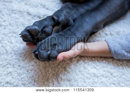 Pair Of Dog Paws And Child Hand