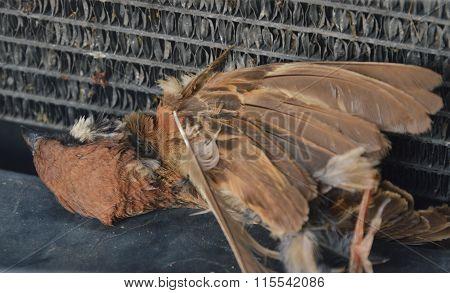 sparrow kill by car