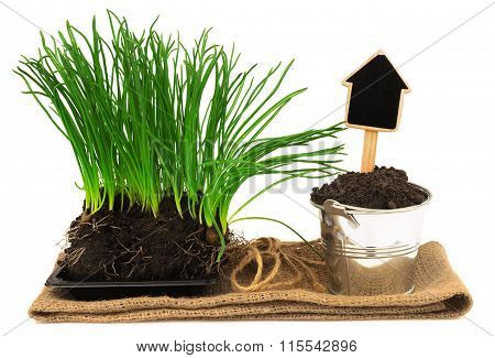 Gardening Concept With Grass, Soil In The Metal Bucket On The Sacking Mat