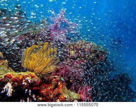 Soft Coral At Similan Island