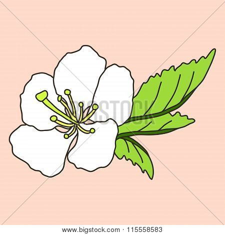 vector hand drawn cherry blossom