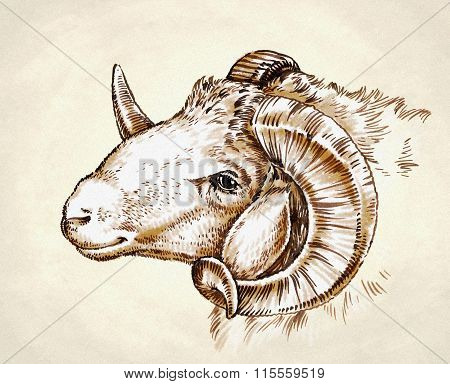 engrave ink draw sheep illustration