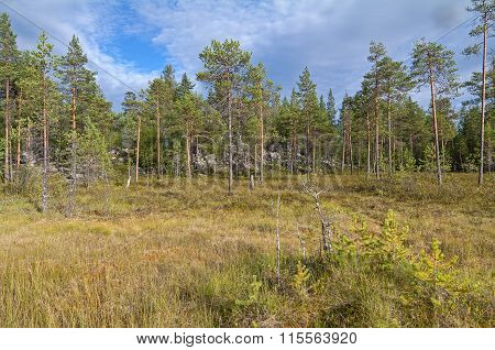 Swampy Forest Edge.