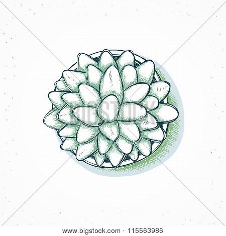 Isolated plants handmade, flower in sketch style