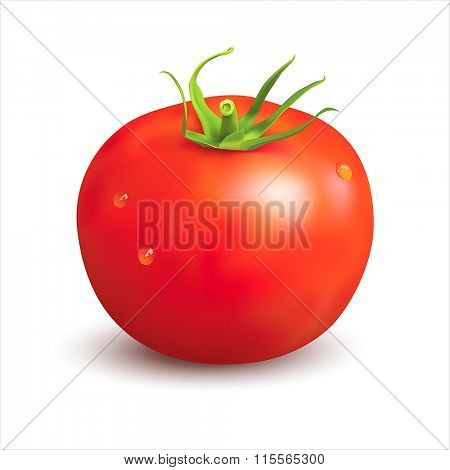 Ripe red tomato on white. Vector illustration.