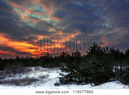 Winter Sunrise In A Pine Forest With A Fiery Sky