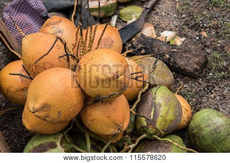 Coconuts Lying on the Ground