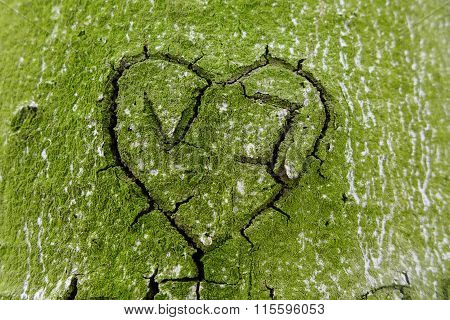 Lichen-grown Cracked Heart Cut In Tree Bark, Love Concept
