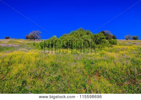 Israel. Legendary Golan Heights in a beautiful sunny day. Spring flowers and fresh grass