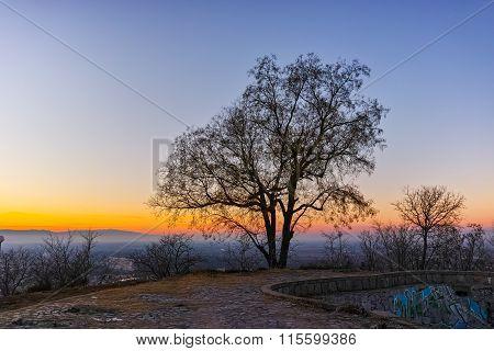 Sunset over lonely tree, Dzhendem tepe hill, city of Plovdiv, Bulgaria