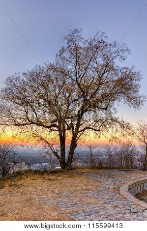 Sunset over Alone Tree, Dzhendem tepe hill, city of Plovdiv, Bulgaria
