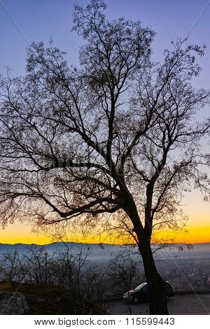The tree silhouette In the evening, Dzhendem tepe hill, city of Plovdiv