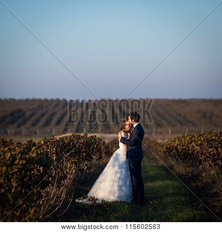 Fairytale Romantic Couple Of Newlyweds Hugging At Sunset In Vineyard Field Wth Bushes Surrounding Th