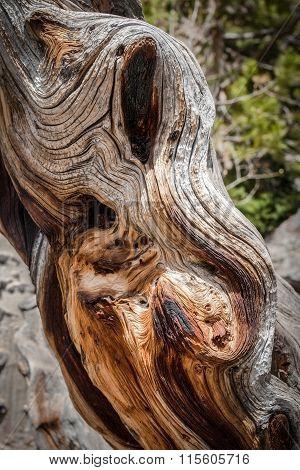Weathered and Burned Tree Stump