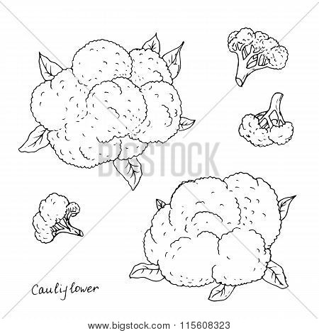 hand drawn cauliflower