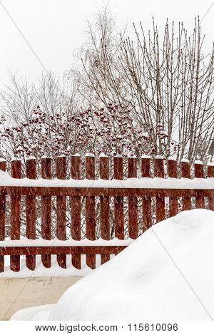 Winter Landscape Backyard