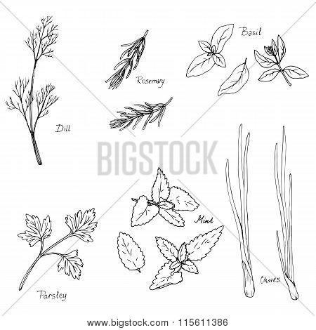 hand drawn spice herbs