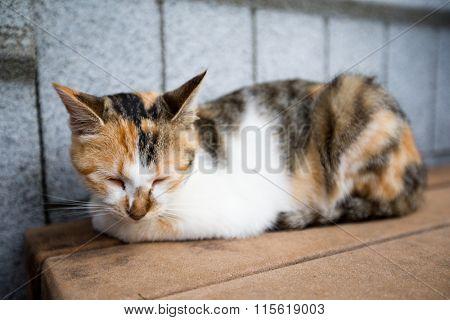 Cat at street