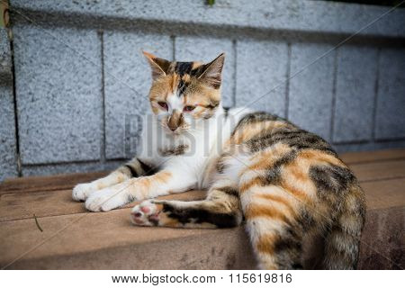 Cat sitting at outdoor