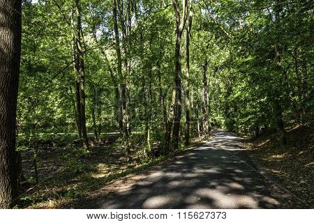Beautiful forest foliage on a sunny summer day