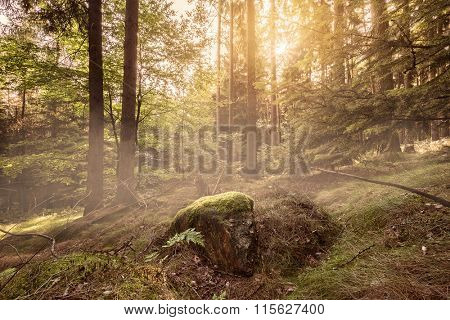 Sun coming up in a beautiful forest setting