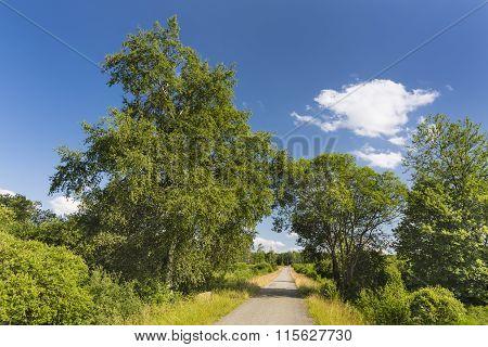 Road Through Moor Landscape In The High Fens, Belgium