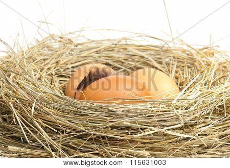 Raw Yellow Eggs