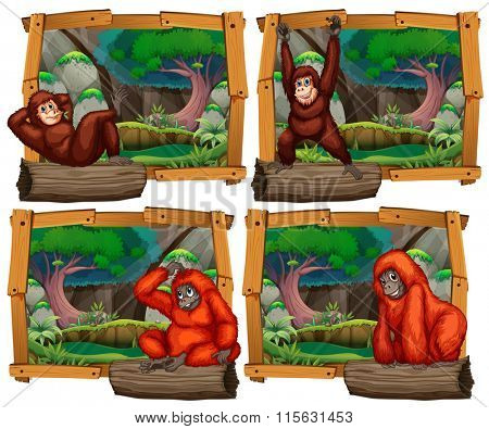 Four scenes of monkey in the jungle illustration