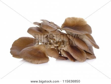 Oyster Mushroom On White Background