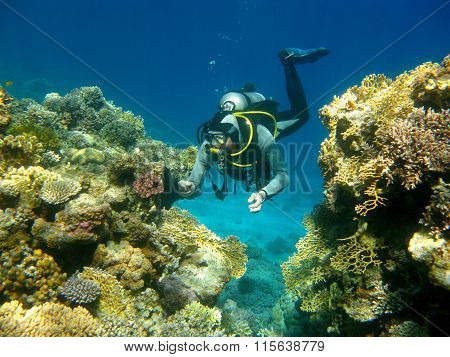 Colorful Coral Reef And Diver In Tropical Sea, Underwater