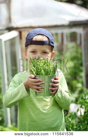 Handsome Little Boy Holding Green Peas In Garden.