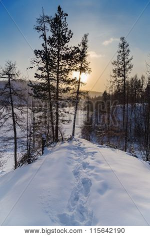 Winter Landscape With Footprints In The Snow
