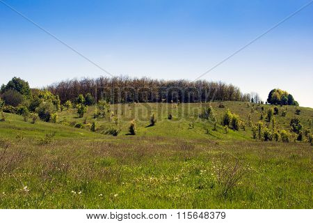 Landscape Of A Grassy Valley, Hills With Forest And Sky