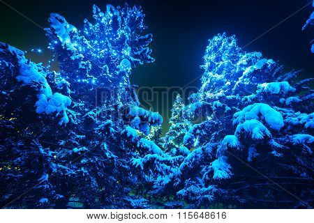 Snow covered Christmas tree lights in a winter forest by night.