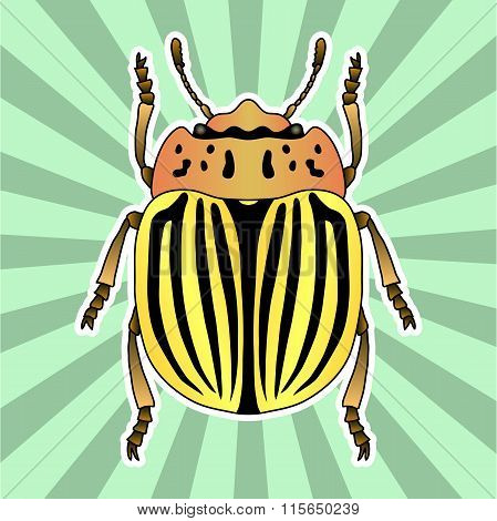 Insect anatomy. Sticker  colorado potato beetle. Leptinotarsa decemlineata. Sketch of colorado potat