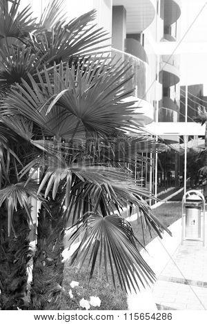Palm trees, retro stylization, close-up