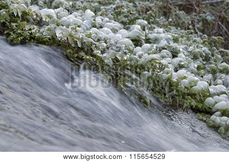 Grass covered with ice at the creek