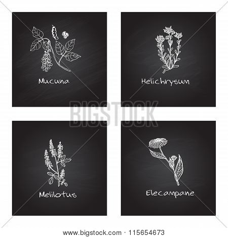 Handdrawn Medicinal Herbs - Health and Nature Set